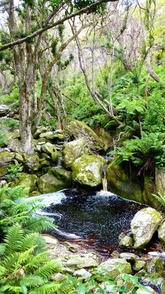 Marmoth Nature Reserve, Swellendam near Cape Town! Provinces Of South Africa, Cape Town South Africa, Volunteer Abroad, Lush Garden, Nature Reserve, Tourism, Things To Do, Scenery, Places To Visit