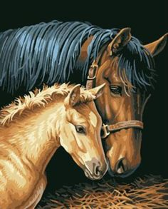 Horse DIY Paint by Number Kit Acrylic Oil Painting on Canvas for sale online Acrylic Painting Canvas, Painting Frames, Diy Painting, Pictures To Paint, Wall Art Pictures, Painting Pictures, Horse Couple, Couple Painting, Paint By Number Kits