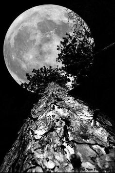 Full Moon up the tree. - by Mike Finn Photography. Sun and the Moon Moon Shadow, Moon Photos, Moon Pictures, Big Moon, Full Moon, Moon Dance, Shoot The Moon, Moon Magic, Beautiful Moon
