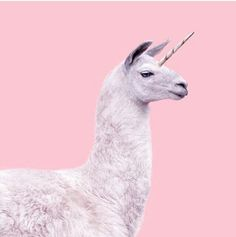 Llame unicorn. Magical creature. astel pink