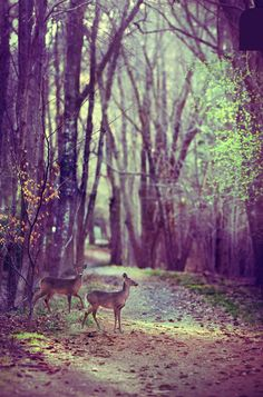 ..while taking a walk through an enchanted forest.. (Deer in Woods by Christopher O'Donnell)