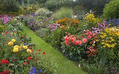 Herbaceous borders on a budget!- quick growing perennials- evergreen options for garden anchors