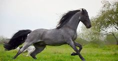 Beauties « Heart of a Horse – TWH