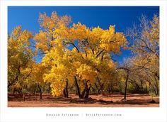 New Mexico-Fall