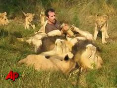 ▶ African Lions accept man as one of their own - Animal behaviorist / Lion whisperer Kevin Richardson South African Lions, Lions South Africa, Lion Tamer, Kevin Richardson, Lion Pride, All Gods Creatures, Worlds Of Fun, Beautiful Cats, Wildlife Photography