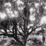 Su regreso a su natal Aimores, en Brasil, con el bosque tropical y la granja en la que creció, fue el detonante para la creación de Génesis, la más reciente exposición del fotógrafo brasileño Sebastião Salgado, que se estará exhibiendo en el Museo de Historia Natural, en Londres a partir del 11 de abril.Génesis es …