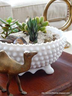 Easy cactus and succulent garden…..