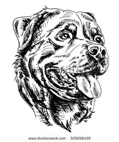 Hand drawn realistic Rottweiler dog head pen and ink illustration isolated