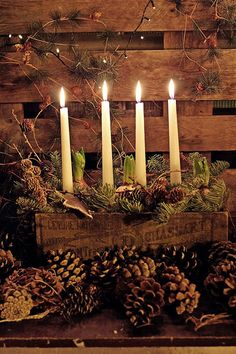 Beautiful Advent candles arranged in a vintage wood box with bulbs and greens and pine cones. Perfect for natural rustic winter and Christmas decorating. Natural Christmas, Christmas Candles, Primitive Christmas, Country Christmas, All Things Christmas, Winter Christmas, Christmas Decorations, Minimal Christmas, Ceremony Decorations