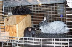 There are many types of rabbit nest boxes out there. It works very well for our heritage breed rabbits. Rabbit Nesting Box, Nesting Boxes, Rabbit Farm, Rabbit Colors, Nest Box, Genetics, Rabbits, Cage, Brick