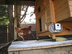 1000 Images About Chicken Coop Door On Pinterest