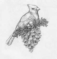 Draw what you see Christmas Doodles, Cardinal Birds, What You See, Pyrography, Line Drawing, Animal Drawings, Art Sketches, Folk Art, Art Projects