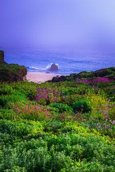 Big Sur, Calif. Photograph Fog,Flowers,and Wave by Jingjing Li on 500px