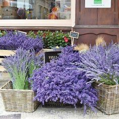 de: Provence mon amour on FB