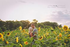 Couples photography. Sunflower fields.