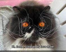 hahaha! This cat looks absolutely evil... @Tiffany Gowins-Gravlee