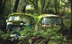 VW In the Jungle