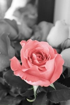 Rose. ~ * ` . . LOVE THE BRILLIANT NOTIONS OF CREATIVE DECORATING. . . ` *