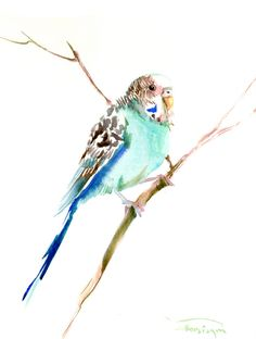 Parakeet, original watercolor painting, 12X 9 in, turqoise birds art, by ORIGINALONLY on Etsy https://www.etsy.com/listing/239720414/parakeet-original-watercolor-painting