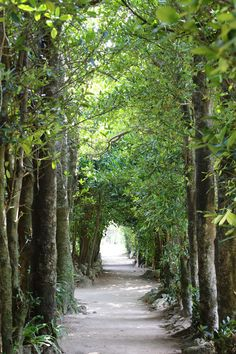 フクギ並木 沖縄 Japan Japan, Okinawa Japan, Places To Travel, Places To See, Trip Tour, Japan Garden, Japanese Geisha, Naha, Paisajes
