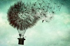 Catrin Welz, blowballs are forever