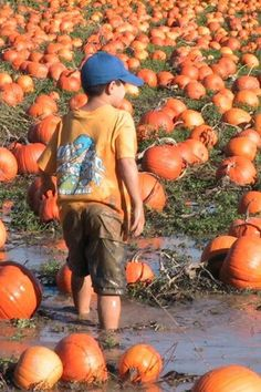 Hmmm, which one do I pick?   At the Pumpkin Patch in Richmond BC. Photo by Kathleen Intile
