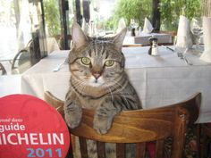 hotel restaurant cats   Cafes, restaurants, bistros are everywhere and it is possible to enjoy ...