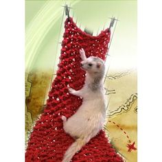 Marshall Ferret Pirate Net will let your fuzzy friend to seek treasure in a new and exciting way.    They can rest or play on this durable cotton net.