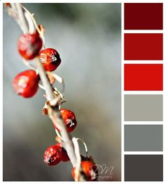 Red and Grey does work for a color palette for a room.
