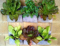 Las 10 hortalizas y plantas perfectas para utilizar en cultivos verticales y urbanos - Succulents, Gardens, Vegetables Garden, Parsley, Vivarium, Vegetable Garden, Plants, Succulent Plants