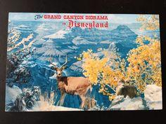 Vintage Main Street U.S.A. Postcard - The Grand Canyon Diorama - Santa Fe and Disney Railroad - Startled Mule Deer by VintageDisneyana on Etsy