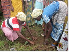 The Ghana Permaculture Nwodua Tree Nursery Project – Saving Lives ...