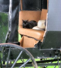Amish Cat… ~ SANDY