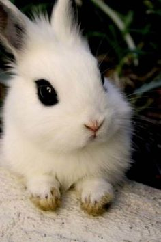 Big eyed bunny!
