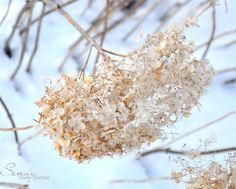 winter flowers by Senay