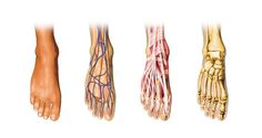 What You Should Know About Foot Anatomy and Physiology