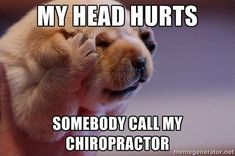 This poor little puppy needs his chiropractor! Did you know chiropractic care can alleviate headaches and migraines?