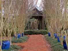 """winter interest"" garden design - Google Search"