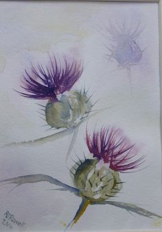 Scottish Thistle >water color tattoo?