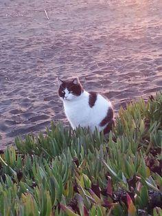 Gatto marino