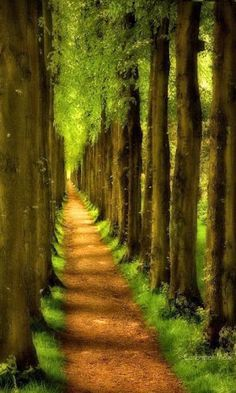 Pathway, Wentworth, England.
