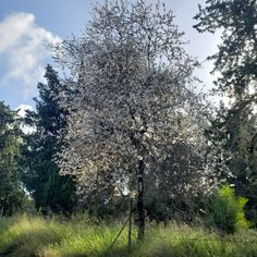 Authentic Jerusalem Tours / Photo by: Yana Milinevsky / 2021-03-18 11:19:47 Almond Blossom, Spring Is Here, Group Tours, Jerusalem, Things To Do, Places To Visit, 18th, Plants, Things To Make