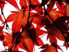 #engicards #acer #autumn #messagefromtheuniverse