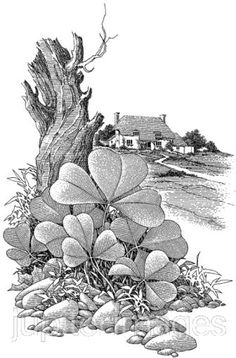 black and white print with cottage in back ground Four Leaf Clover Drawing, Three Leaf Clover, Vintage Pictures, Vintage Images, White Art, Black And White, Printable Art, Printables, Irish Design