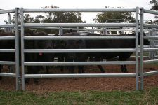 M & M Stockyards - Our Gear - cattle yards, portable panels, ramps, gates. Livestock, Cattle, Gates, Sheep, Fence, Cow, Barn, Gado Gado, Converted Barn