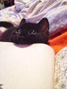gatos-atrapalhando-leitura-10