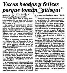 """Vacas beodas y felices porque toman """"guisqui"""". Publicado el 17 de mayo de 1986."""