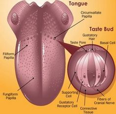 How tongue acts a health indicator