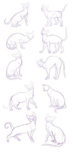 34 New Ideas Drawing Tutorial Cat Sketch Cat Reference, Anatomy Reference, Drawing Reference, Animal Sketches, Animal Drawings, Creature Drawings, Drawing Poses, Drawing Sketches, Sketching