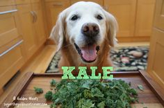Kale and Dogs Healthy Frosty, Green Kale, Ginger Water, Can Dogs Eat, Ice Pops, Sadie, Pets, Healthy Frosting, Popsicles